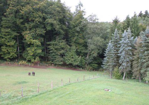**Natur pur** früheres Bauernhaus mit Scheune, Anbau und großem Grundstück in abgelegenem Weiler
